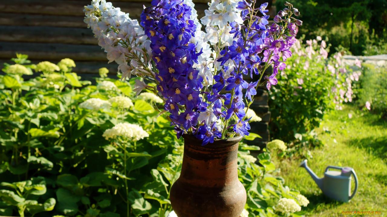 Садовые цветы дельфиниум: фото, описание, посадка, уход в 66